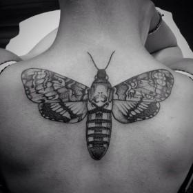 111-papillon